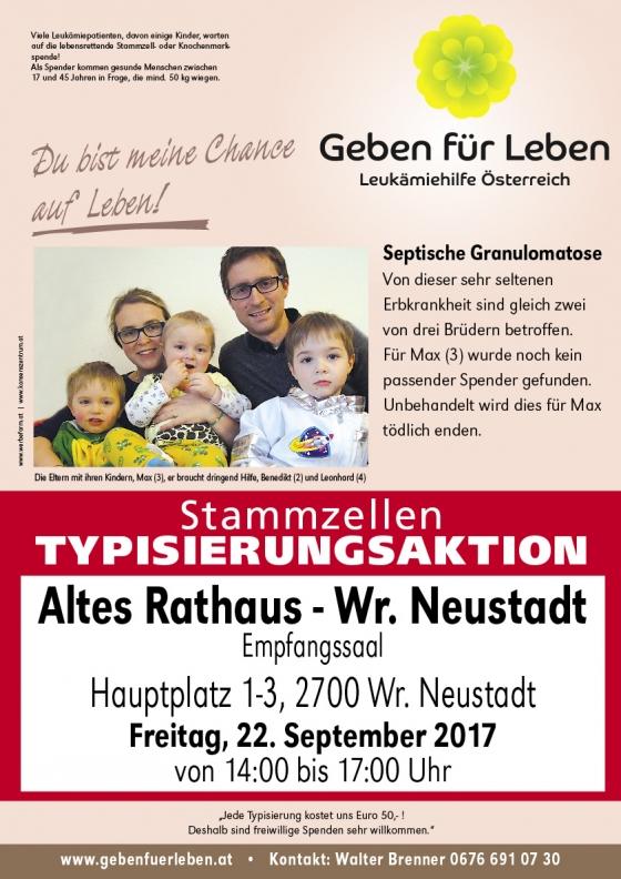 Wiener Neustadt / NÖ für Max (4)
