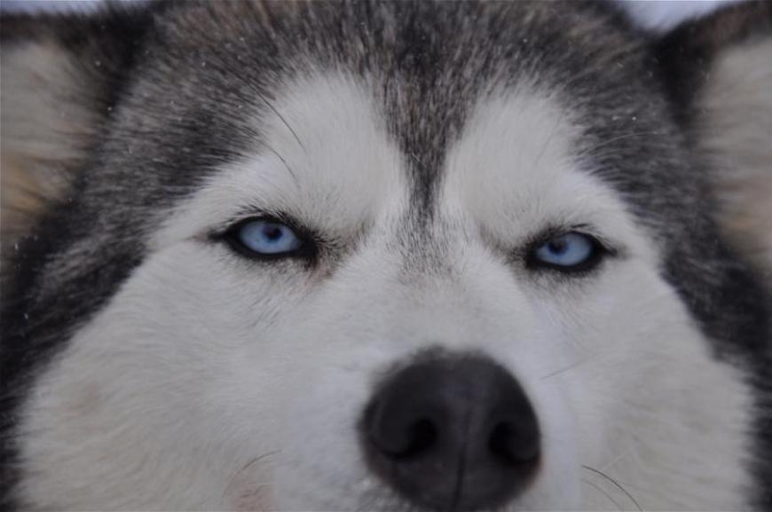 'Husky-Schlittenfahrt mit leukämiekranken Kindern!'-Bild-8