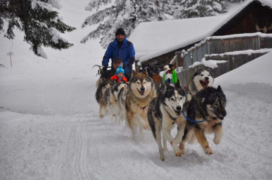 'Husky-Schlittenfahrt mit leukämiekranken Kindern!'-Bild-25