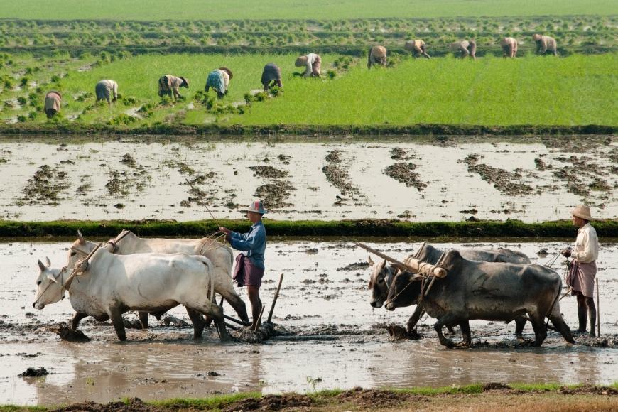 'Mehrfacher Foto-Landesmeister zeigt fantastische Reise durch Burma'-Bild-10