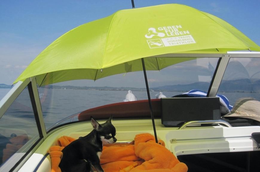 'Kauf von Regenschirmen und Prämierung der lustigsten Schirmfotos!'-Bild-5