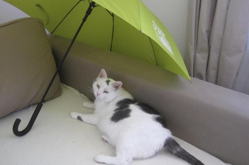 'Kauf von Regenschirmen und Prämierung der lustigsten Schirmfotos!'-Bild-15