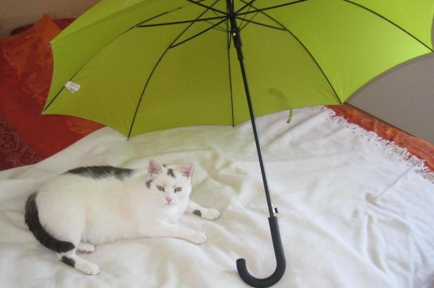 'Kauf von Regenschirmen und Prämierung der lustigsten Schirmfotos!'-Bild-16